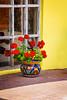 Red Potted Geranium
