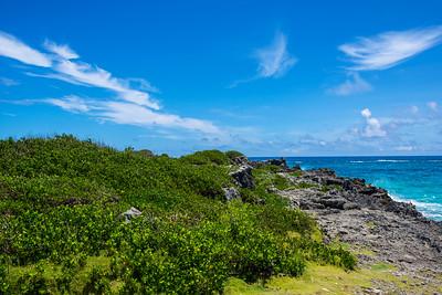 Seaside Meadow