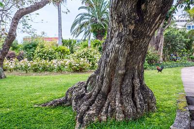 Old Tree Trunk Bermuda