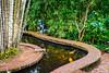 Bermuda Koi Pond