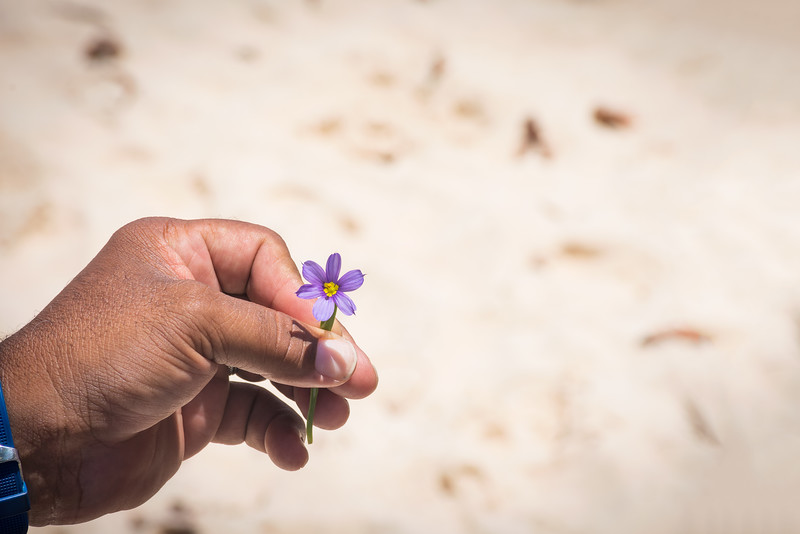 Bermuda National Flower