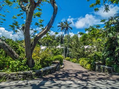 Tropical Landscape Bermuda