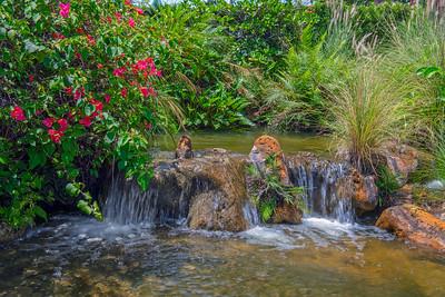 Tropical Garden Fort Laurderdale