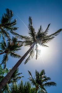 SunlightOnPalmTrees