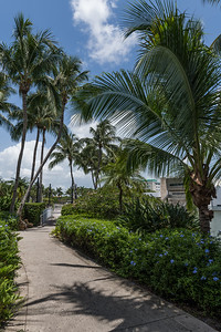 Palm Trees and Walkway