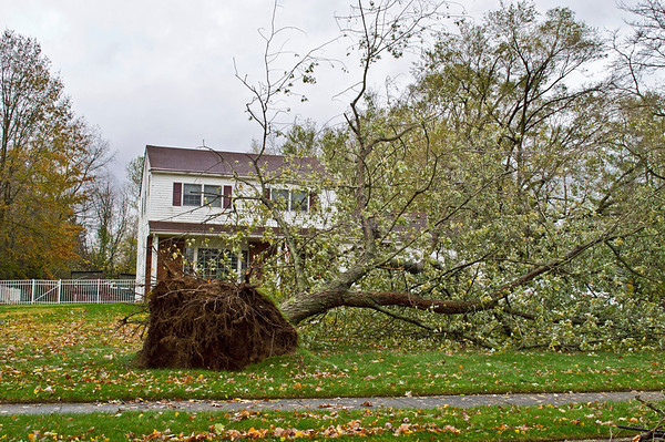 Downed Tree 1