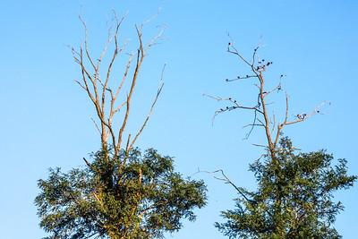 Birds in Tree Top