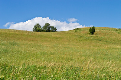 """Summer Hill View""    A green hillside on a beautiful Summer day in Sussex County, New Jersey."