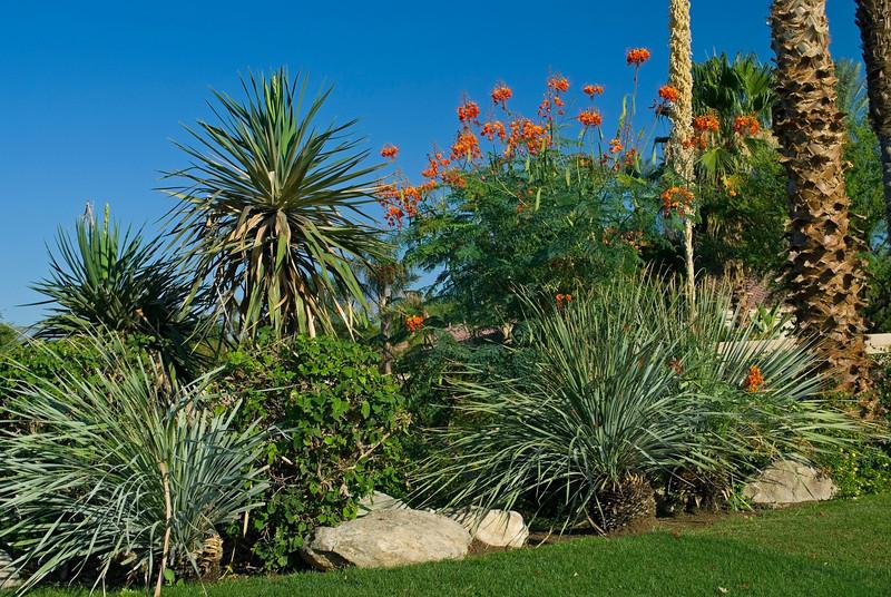 """""""Desert Garden""""<br /> Various Desert plants and cactus in a Palm Springs California garden."""