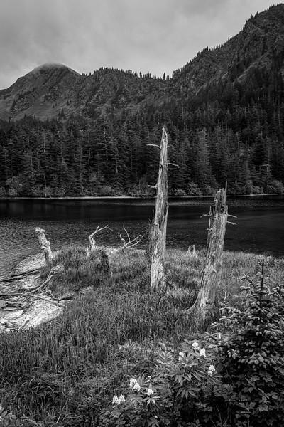 Dead Stumps Fox Island