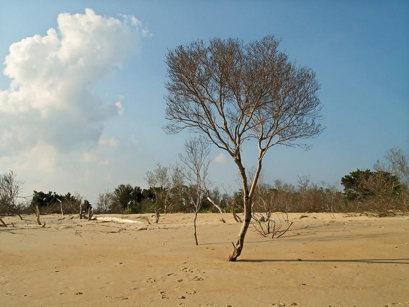 TreeonBeach
