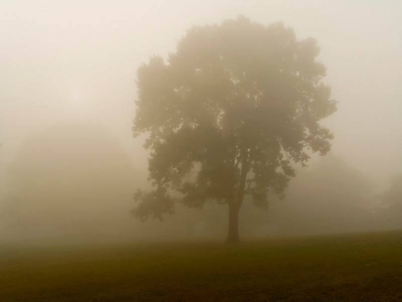 """""""Dense Fog""""<br /> Early morning fog in this field in Monmouth Battlefield State Park in New Jersey."""