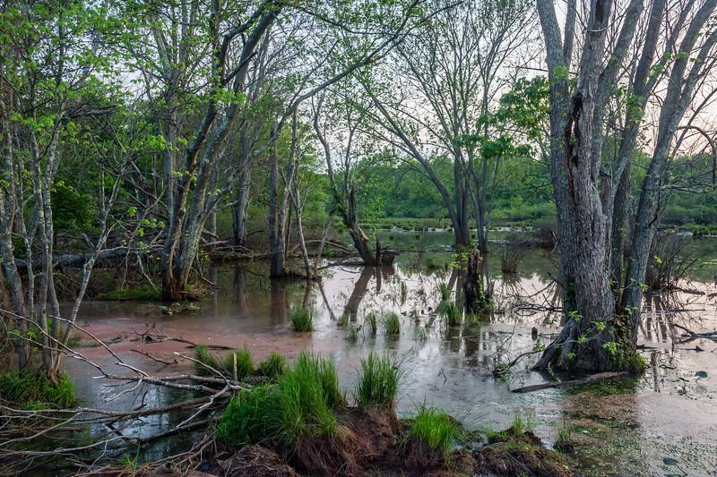Marsh Landscape at Dusk