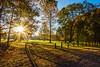 Morning Sunlight In Park