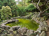 """Green Pond""  <br /> A Japanese style landscaped ornamental garden with pond and various evergreen trees and stone."