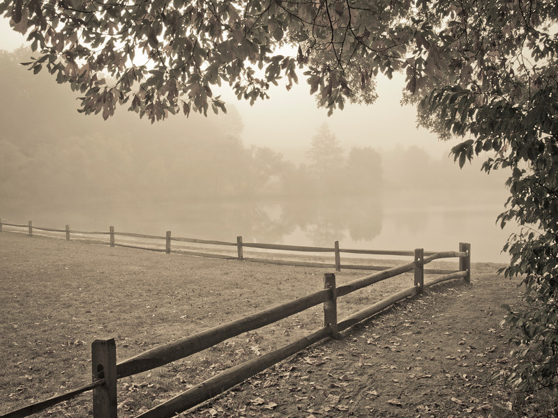 """""""Misty Morning View""""<br /> <br /> A view from shore through the thick early morning fog in Turkey Swamp Park, part of the Monmouth County Park system in New Jersey."""