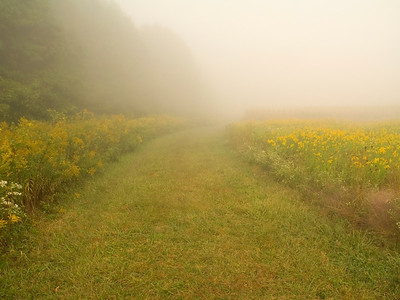 """""""Mystery Path"""" A foggy morning on this trail with goldenrod wildflowers in Central, New Jersey."""