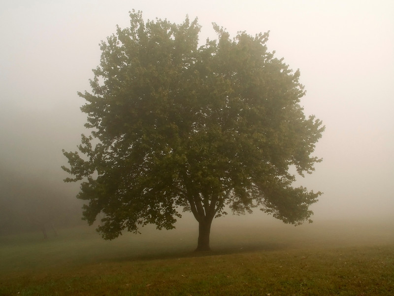 """""""Misty Morning Tree""""<br /> <br /> Early morning fog in this field in Monmouth Battlefield State Park in New Jersey."""