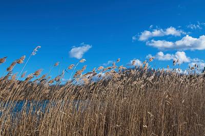 Wind Swept Meadows