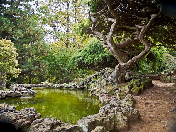 """Oriental Garden"" <br /> A Japanese style landscaped ornamental garden with pond and various evergreen trees and stone."