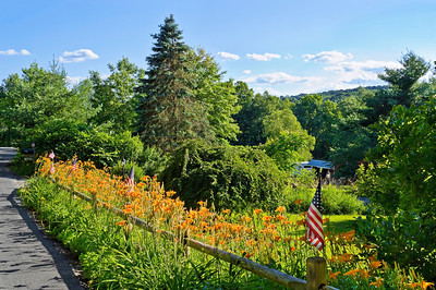 """""""Country Summer"""" A field of tiger lilies on this roadside in northern New Jersey."""