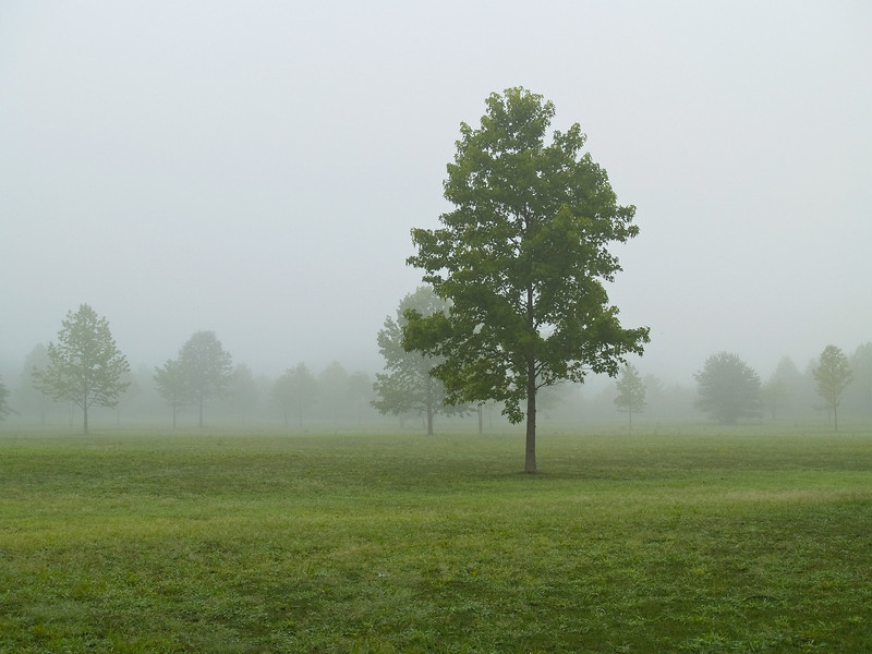 """""""Field and Fog""""<br /> A Summer field with trees on a foggy early morning."""