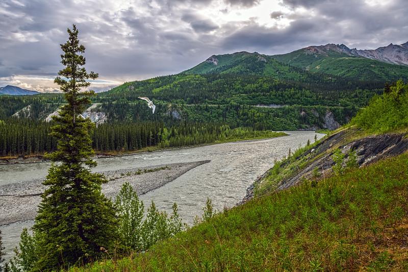 Scenic Denali View
