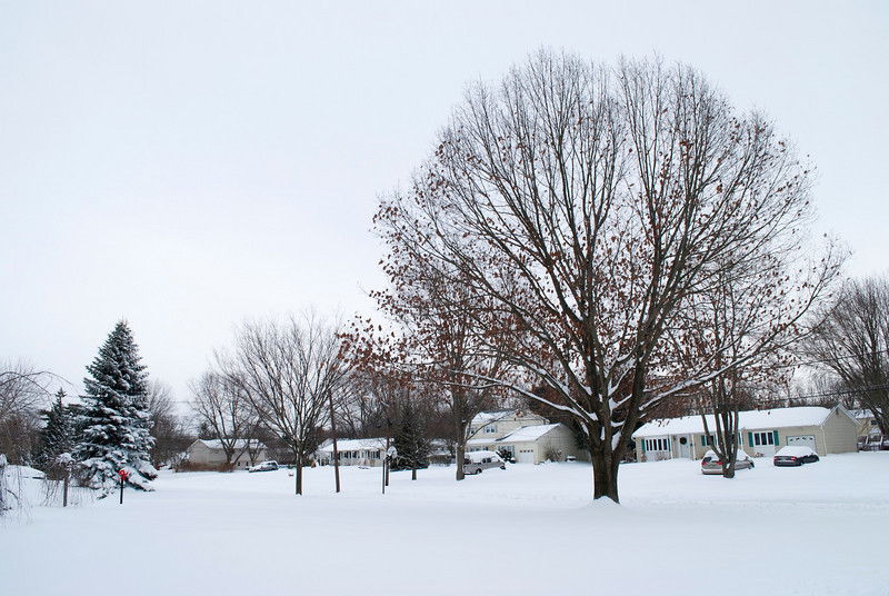 """After the Snow""<br /> A Monmouth County New Jersey neighborhood after a snowfall."