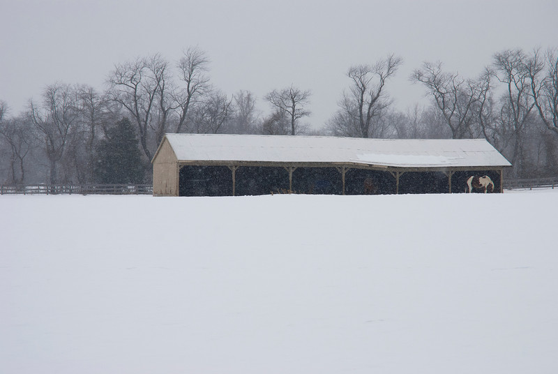 """""""Horse in Snow""""<br /> A rural New Jersey Winter scene during a snowfall."""