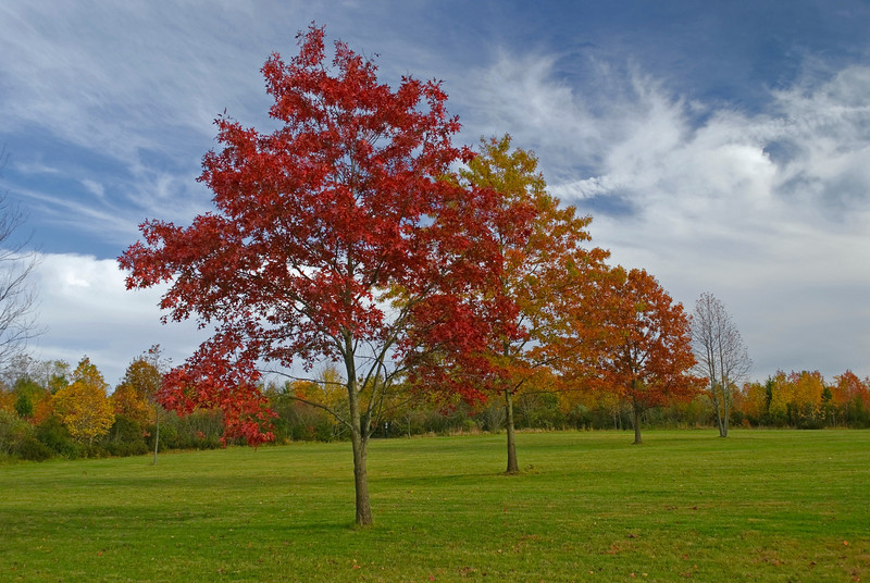 """Autumn Stages""<br /> Autumn trees and green grass in Thompson Grove Park in Manalapan, New Jersey."