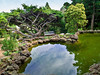 """Ornamental Pond View""<br /> A Japanese style landscaped ornamental garden with pond and various evergreen trees and stone."