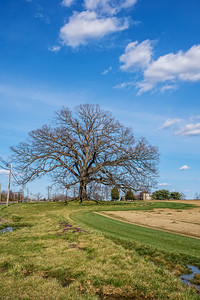 Tree and Rural Field