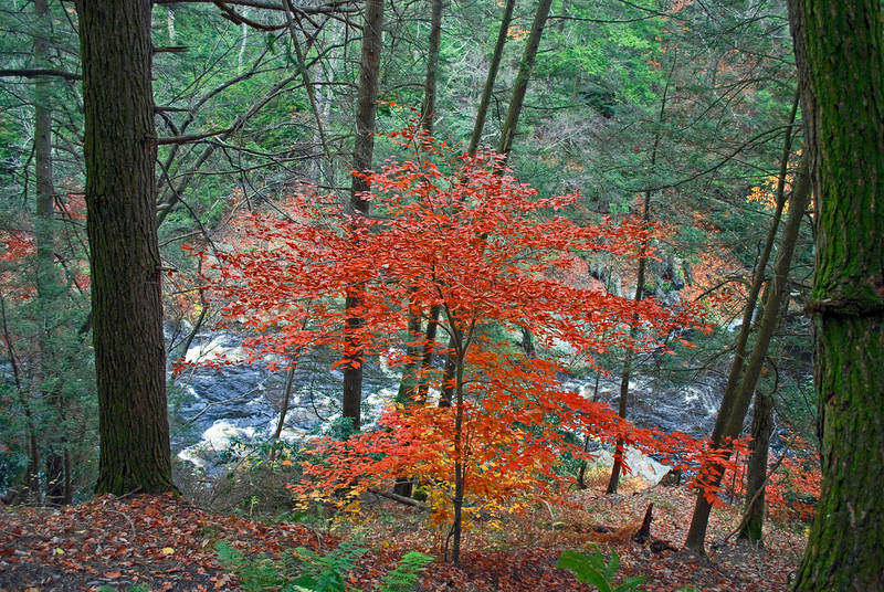 """Deep Ravine""<br /> <br /> A vibrant Autumn tree high above this ravine in the Pocono Mountains of Pennsylvania."