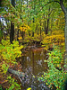 """Early Autumn Brook""<br /> <br /> A small brook in the woodlands of Central New Jersey on this early Autumn day."