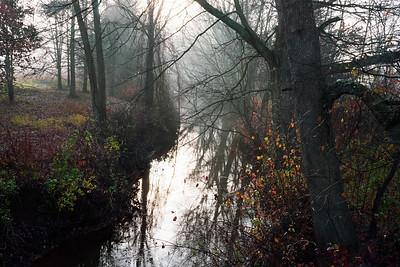 Deep Dark Swamp