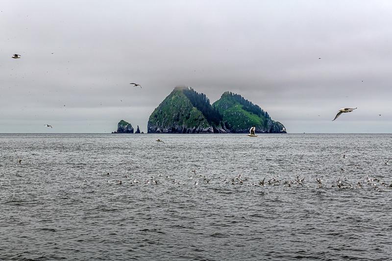 Gulls on Bay