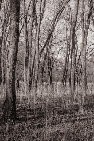 Woodlands Sepia