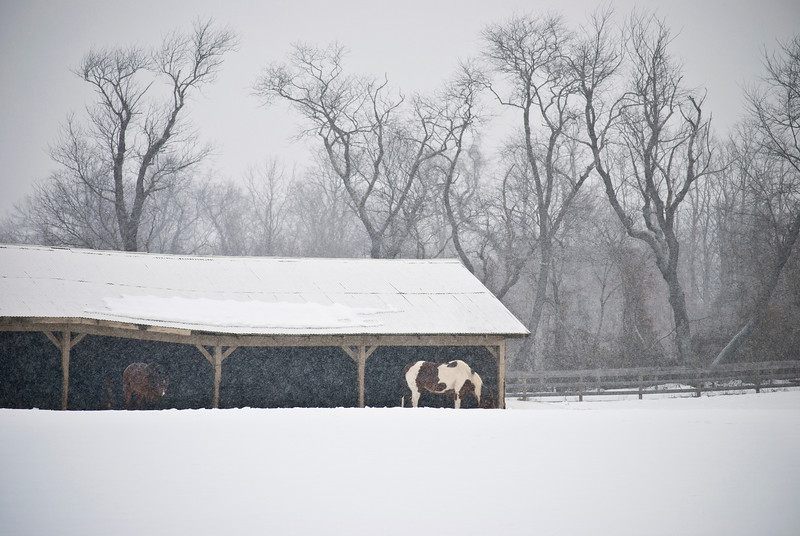 """""""Snowy Farm"""" 2011<br /> A  rural Winter farm scene during a light snowfall in Central New Jersey."""
