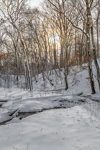 Winter Woodlands Light
