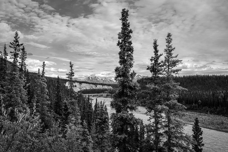 Tall Pines Over the Nenana