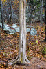 Withered Tree Trunk