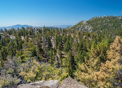 San Jacinto Forest