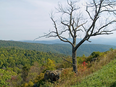 """Tree Top Shenandoah"" A bare tree on a hillside in Shenandoah National Park during Autumn."