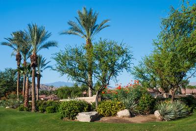 Desert Oasis Garden