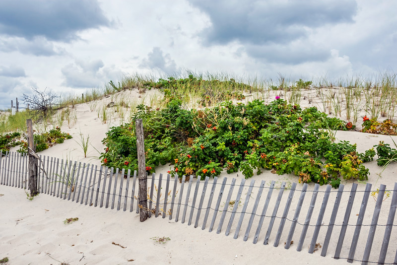 Plants on the Sand Dunes