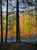 """""""Dark and Light Forest"""" 2007<br /> <br /> An Autumn woods view across a stream near Bushkill in the Pocono Mountains of Pennsylvania."""