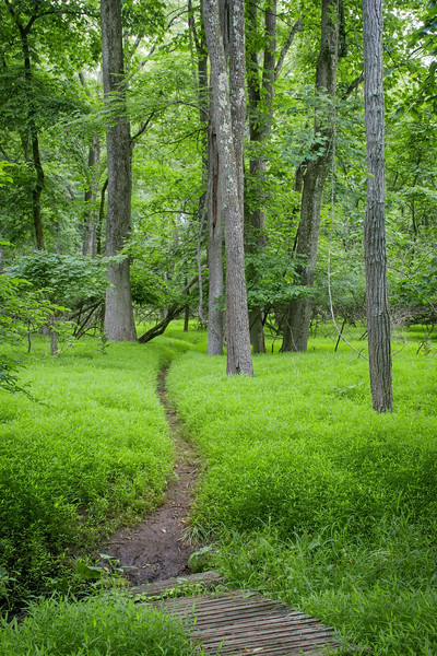 Green Woodlands Path