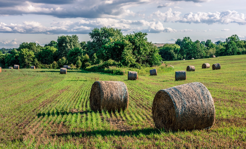 Field and Bales