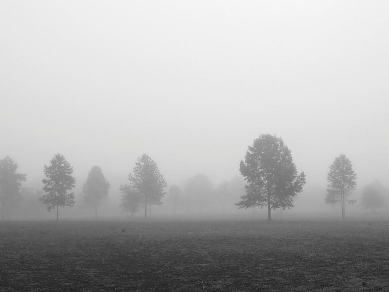 FoggyFieldBW