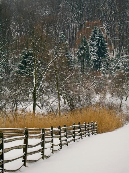 WinterPinesandFence